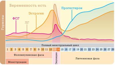 Фазы менструального цикла: маточного (полиферативная, стимулирующая), яичникового (фолликулярная, овуляция, лютеиновая)