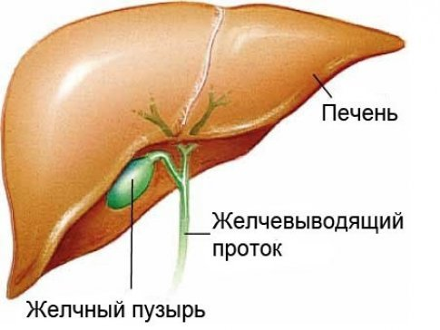 Эмпиема желчного пузыря: причины, симптомы, диагностика, лечение, прогноз, профилактика