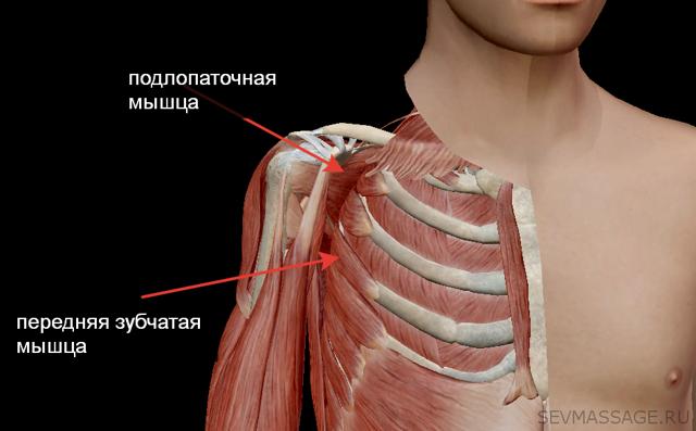 Хрустит в спине в районе лопаток или пояснице: при поворотах, выпрямлении, движении, наклонах, причины