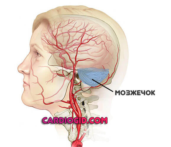 Токсическая энцефалопатия головного мозга алькогольного генеза: причины, симптомы, лечение и прогноз