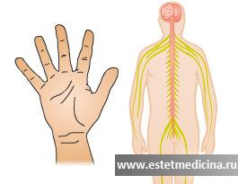 Эндоскопическая симпатэктомия: цена, послеоперационный период, отзывы, осложнения, техника операции