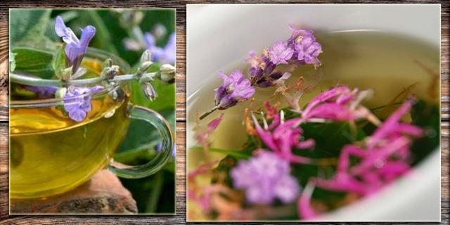 Травы для полоскания горла: при боли, воспалении, кашле, ангине, простуде