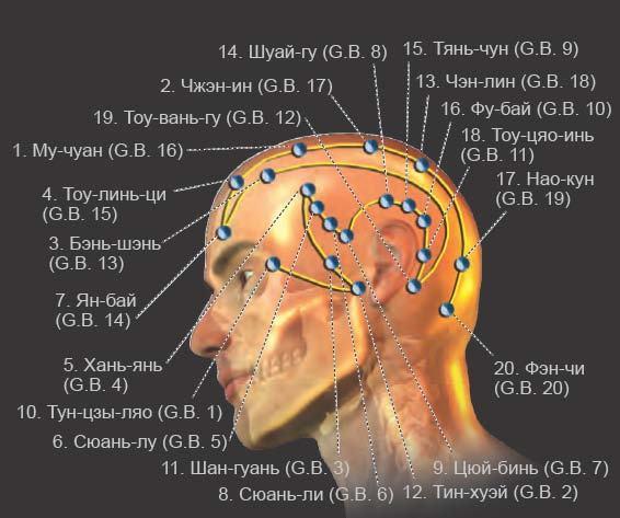 Точки акупунктуры уха: при шуме в ушах, для стимуляции работы органов