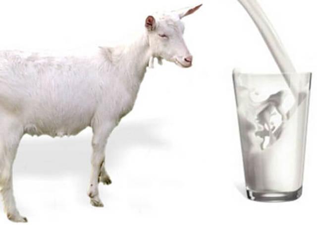Что пить при панкреатите: можно ли кефир, овсяный кисель, кофе, козье молоко, ряженку, соки, какао