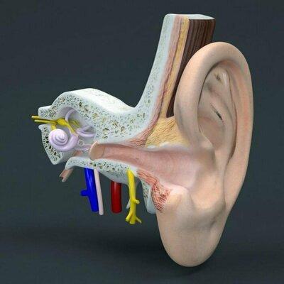 Что показывает МРТ и КТ с контрастом среднего или внутреннего уха