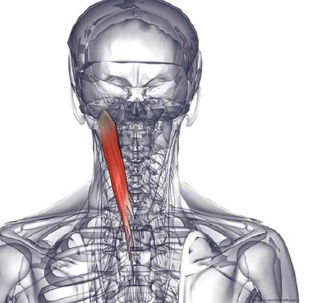 Спастическая кривошея (цервикальная дистония): МКБ-10, лечение у взрослых и грудничков