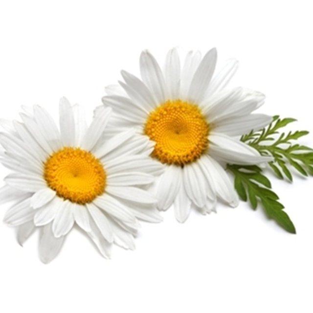 Травы от морщин: виды, названия, рецепты отваров, отзывы