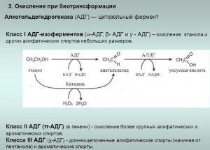 Ферменты расщепляющие алкоголь в организме: название, принцип действия, генетические особенности