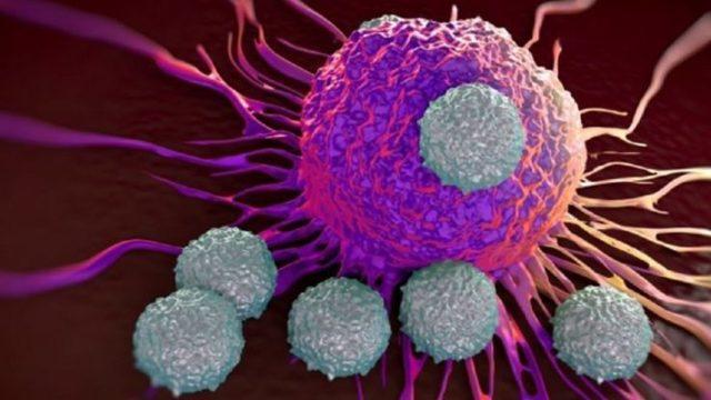 Чем отличается злокачественная опухоль от доброкачественной?