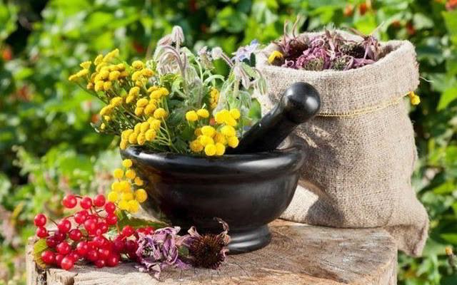 Список трав и сборов для лечения уратных и оксалатных камней в почках у мужчин и женщин